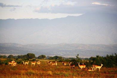Wildlife in Queen Elisabeth National Park