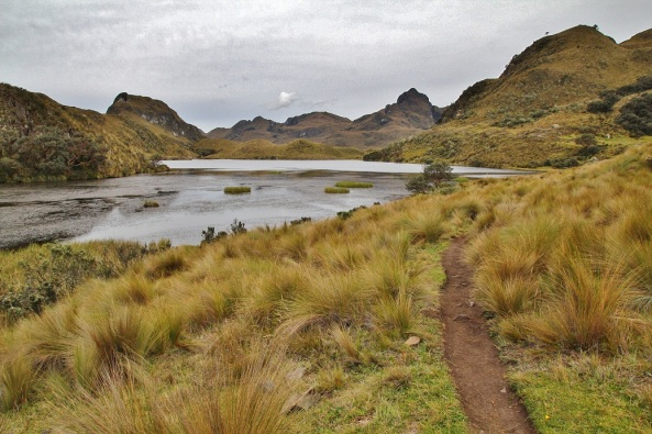 Cajas NP