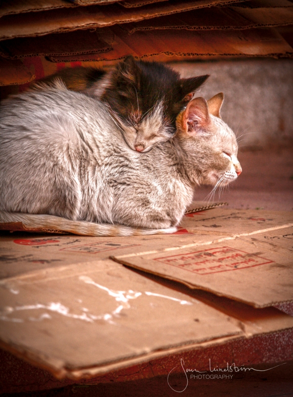 Street cats in Morocco..jpg
