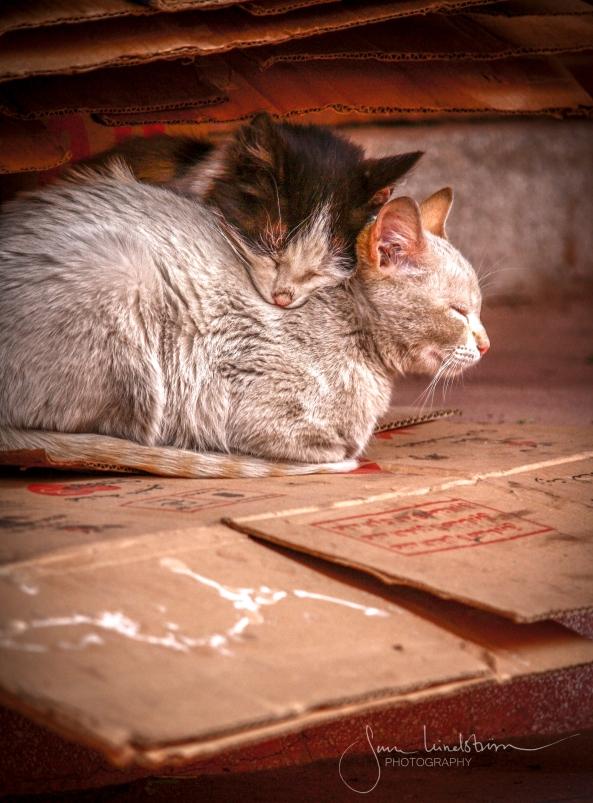 Street cats in Morocco..jpg